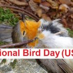 National Bird Day, National Bird Day History, National Bird Day Story